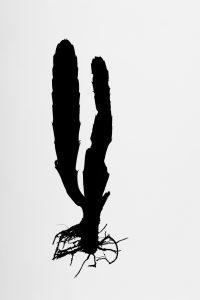 Silueta #011. 2014. Fotografía, impresión giclée. 56 x 40 cm.