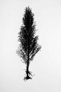 Silueta #013. 2014. Fotografía, impresión giclée. 56 x 40 cm.