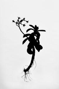 Silueta #018. 2014. Fotografía, impresión giclée. 56 x 40 cm.