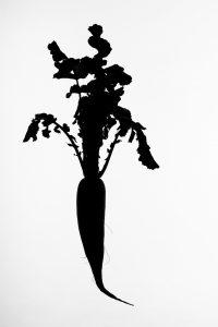 Silueta #017. 2014. Fotografía, impresión giclée. 56 x 40 cm.